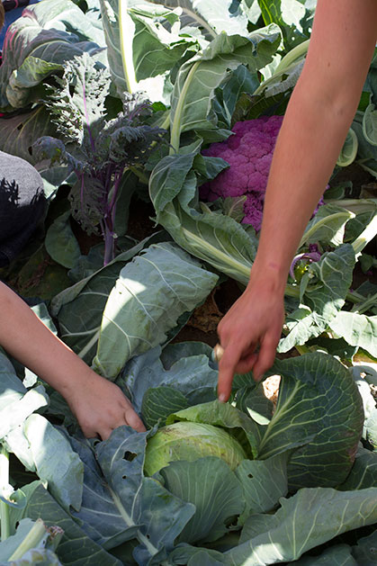 2015-09-25-Seed-to-Table-10