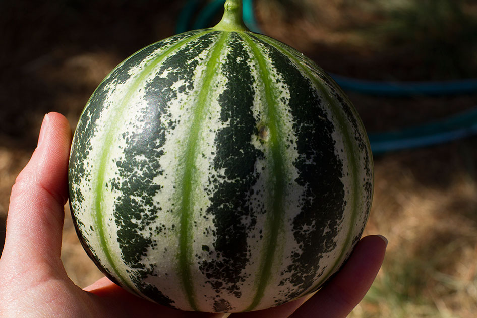 2015-09-25-Seed-to-Table-41