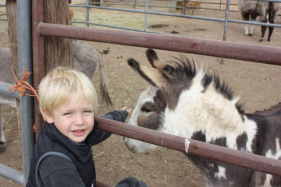 2015-10-08 DD Ranch Pumpkin Patch Field Trip